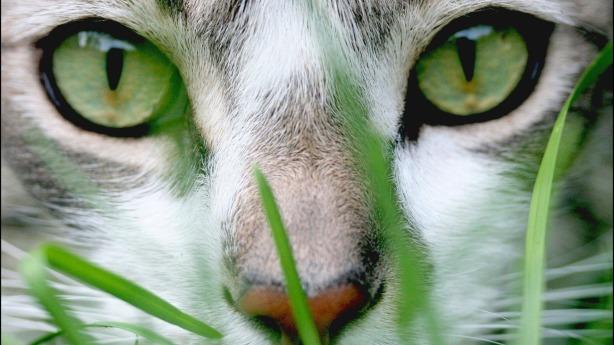 green-cat-eyes-1920-1080-7803